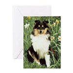Shetland Sheepdog Photo Greeting Cards