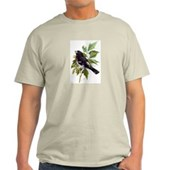 Rose-breasted Grosbeak Light T-Shirt